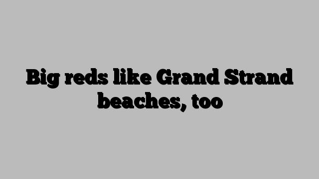 Big reds like Grand Strand beaches, too