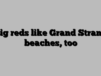 Big reds like Grand Strand beaches, too