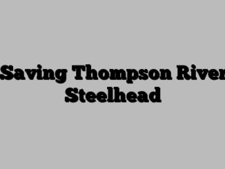 Saving Thompson River Steelhead
