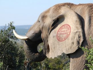 Chumion: Idaho Introduces Proposal to Build Elephant Hatchery