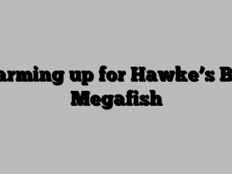 Warming up for Hawke's Bay Megafish