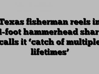 Texas fisherman reels in 14-foot hammerhead shark, calls it 'catch of multiple lifetimes'