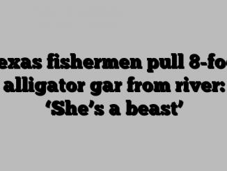 Texas fishermen pull 8-foot alligator gar from river: 'She's a beast'