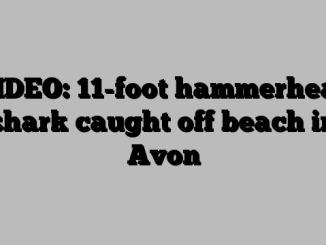 VIDEO: 11-foot hammerhead shark caught off beach in Avon