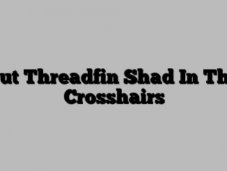 Put Threadfin Shad In The Crosshairs